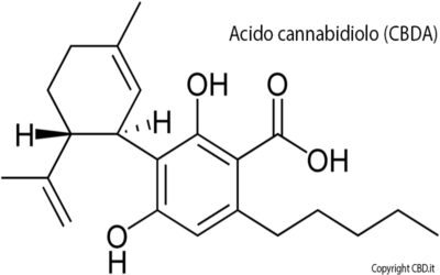 CBDV – Cannabidivarin